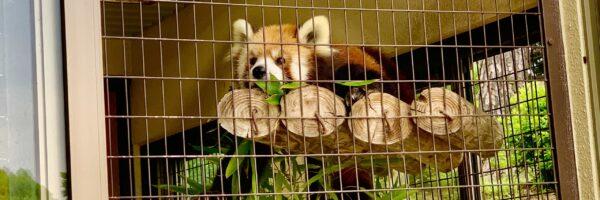 「そうだ動物園に行こう」GoTo姫路市立動物園